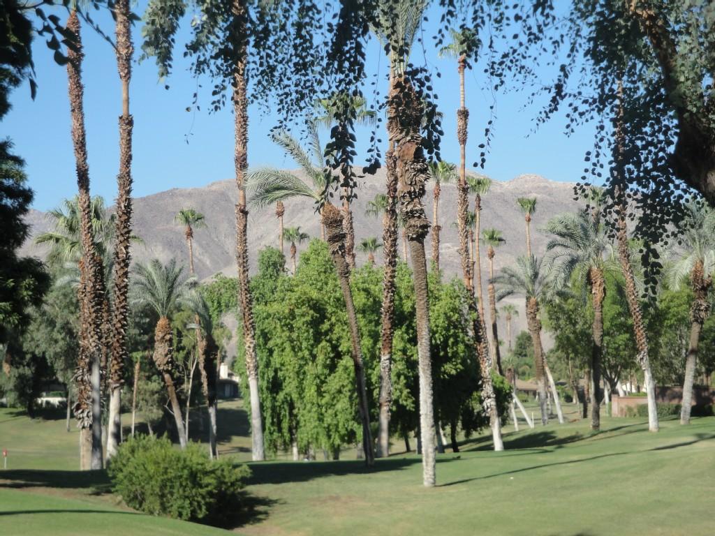 3 Bed Short Term Rental Condo palm desert
