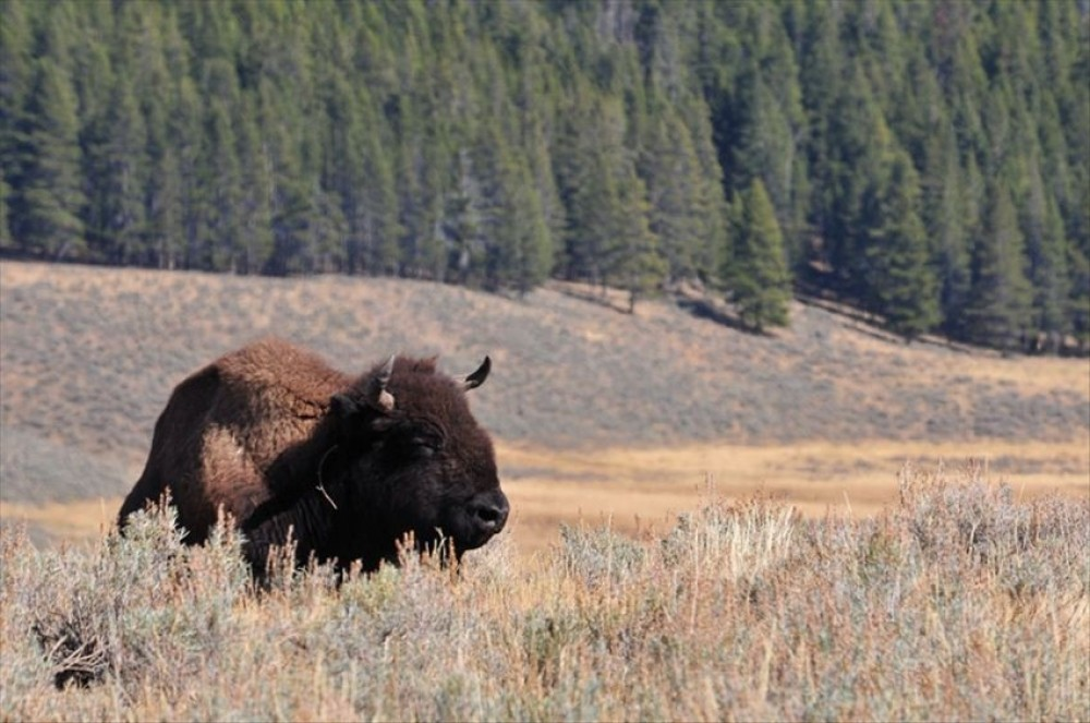 Yellowstone-~AC~Inn Passport to Paradise/ Yellowstone Park, Horsebackrides