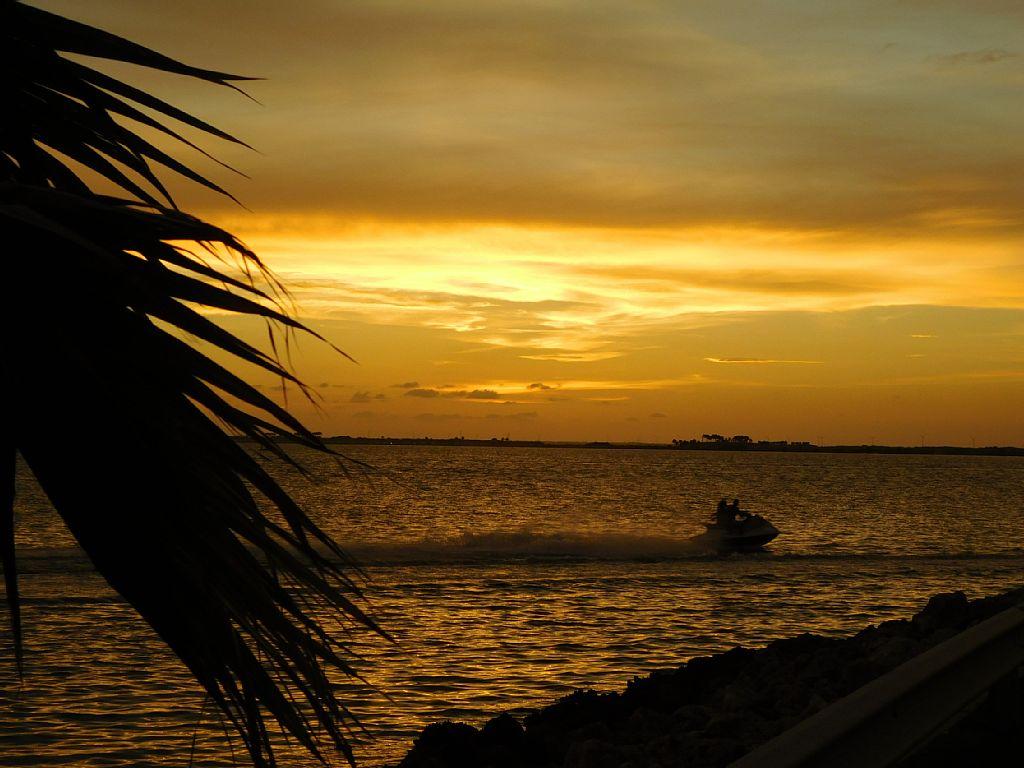 Tampabay Waterfront - Busch Gardens, Sports, Convention Center, Cruise Terminal