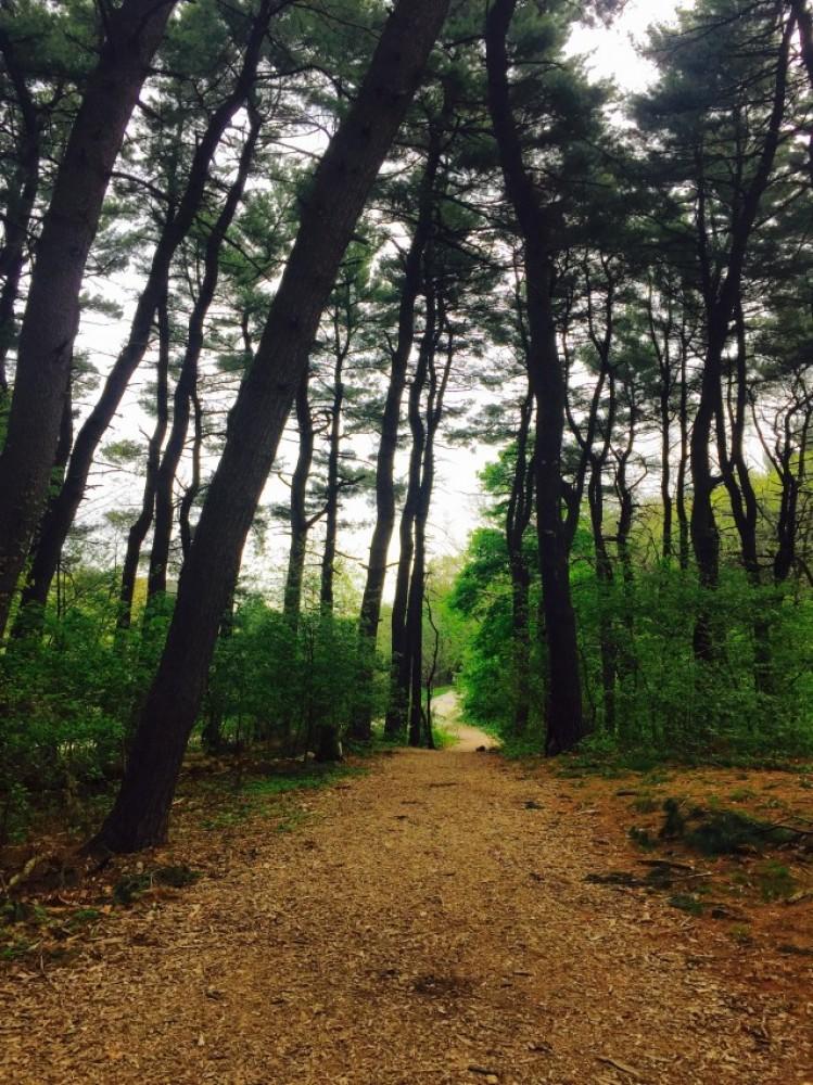 Airbnb Alternative Cambridge Massachusetts Rentals