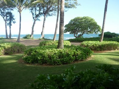 #163 Almost Oceanfront Kauai Condo Vacation Rental By Owner