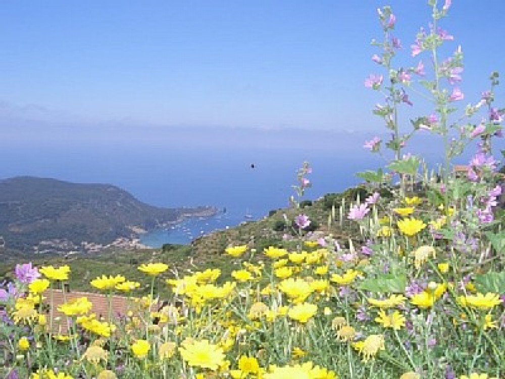 Giglio vacation Apartment rental